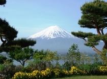 5月前庭からの富士山