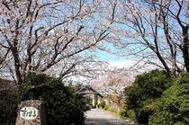 桜とすばる