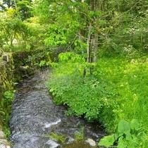 *敷地内を流れる小川