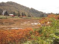 高谷池湿原の紅葉
