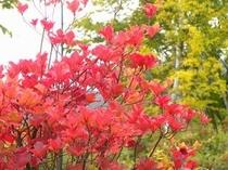 10月は高い山から紅葉が