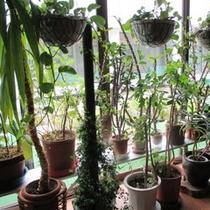 ラウンジの植物たち