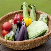 新鮮で美味しい採れたての高原野菜を使っております