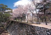 松阪城(桜)