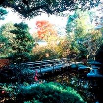 秋/夏の暑さが過ぎ去り、木々がほのかに色付きはじめます。