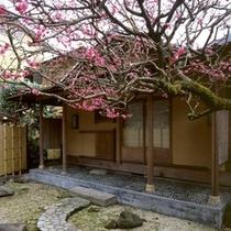 早春/庭園にある茶室の周りもピンク色の梅で彩られます。