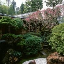 早春/梅がかわいらしく芽吹く、まだ寒い早春の庭。