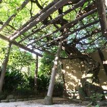 *庭園/春に見ごろを迎える大きな藤棚。須雲川の清流を取入れた日本庭園です。
