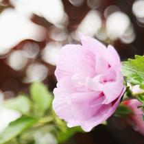 伊豆高原の爽やかな空気は、朝晩涼しく過ごしやすいです。