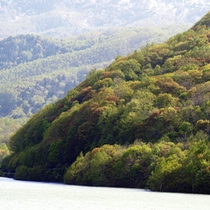 朝里湖の紅葉