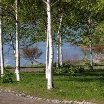 朝里湖の新緑