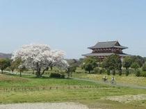 平城宮跡の桜