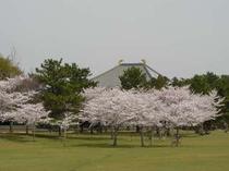 春日野の桜