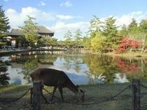 東大寺の紅葉