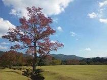飛火野の紅葉