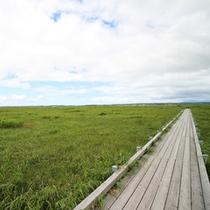 *【周辺/サロベツ湿原センター】広大で北海道のスケールを肌で感じられる自然の宝庫です。