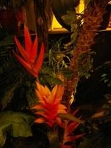 ジャングルゾーン とげとげお花