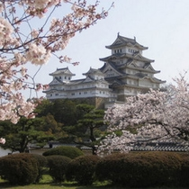 ◆姫路城と桜