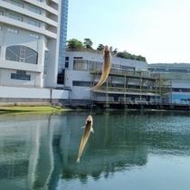 ホテル目の前の海では気軽に釣りを楽しむことができます
