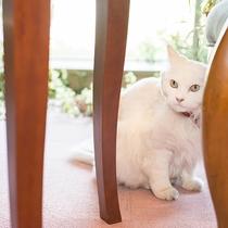 *癒しの招き猫「パトラ」がお客様のご来館をお待ちしております♪