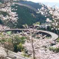 桜とループ橋