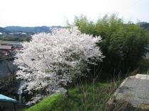客室から見える風景(春)
