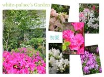 *白子ホワイトパレス_garden_初夏