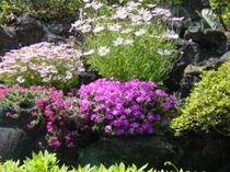 お庭に咲花
