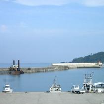 目の前にある港では毎朝、新鮮な魚介類が上がります。