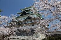 春は桜満開☆彡名古屋のシンボル・名古屋城