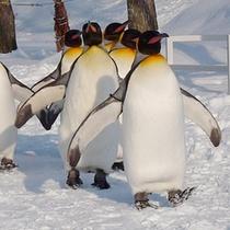 冬の旭山動物園 ペンギン