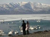 屈斜路湖(白鳥の飛来する砂湯)