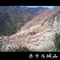 梅の宴【2月上旬~3月下旬】 《車で約10分》