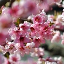 ■桃の花■
