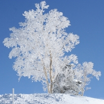 【竜王スキーパーク】樹氷