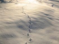 雪景色Ver5