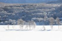 周辺風景(冬)