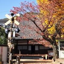 【秋の常称寺】常称寺の脇にあるいちょうが見事。この美しい風景は国道からも楽しむことができます。