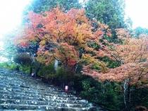 金堂への階段横