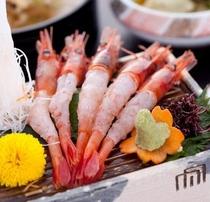 ≪甘海老≫富山湾の味をお造りで。