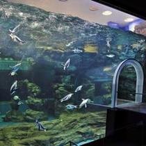『ペンギン村』水中トンネル