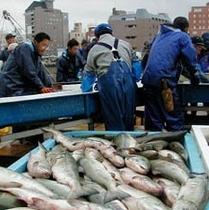 秋鮭の水揚げ風景が見れる企画もあります