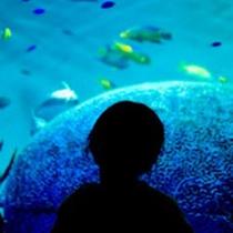 不思議な海の旅へ出発♪水族館うみたまご ※ご宿泊プラン有※
