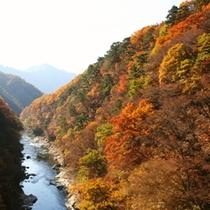 秋の片品渓谷