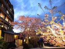 赤尾ホテルの夜桜♪