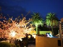 早咲きの河津桜ライトアップ♪