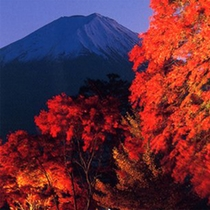 *富士河口湖紅葉まつり/昼間の紅葉とは違った美しさをどうぞごゆっくりご覧ください♪