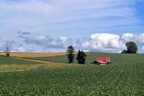 麓郷畑の風景