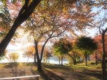 秋のホテル前庭園②