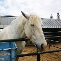石筵ふれあい牧場のお馬さん♪